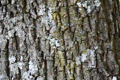 Ruwe natuurlijke textuur voor achtergrond - boomschors Gedetailleerde textu Royalty-vrije Stock Foto
