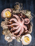 Ruwe Octopus in kom op visnet met overzeese shell en citroen, blauwe houten lijst Royalty-vrije Stock Foto