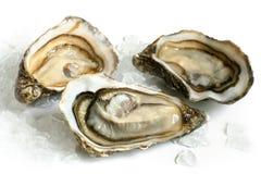 Ruwe oesters met ijs Royalty-vrije Stock Fotografie