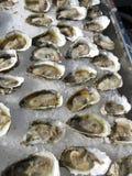 Ruwe oesters op ijs Stock Foto
