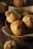 Ruwe Organische Bruine Jicama Stock Afbeeldingen