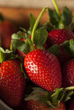 Ruwe Organische Lange Stamaardbeien Stock Afbeeldingen