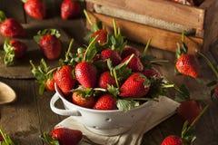 Ruwe Organische Lange Stamaardbeien Stock Fotografie