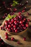 Ruwe Organische Rode Amerikaanse veenbessen Royalty-vrije Stock Afbeelding