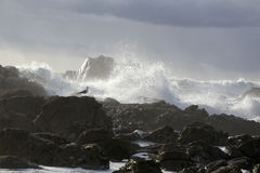 Ruwe overzees op de rotsachtige kust Stock Afbeeldingen
