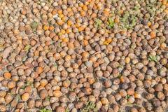 Ruwe Pinangnoot in Thailand stock afbeeldingen