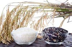 Ruwe rijst, Selectie van Rijst royalty-vrije stock foto's