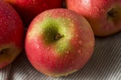 Ruwe Rode Organische Roze Dame Apples Stock Fotografie