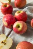 Ruwe Rode Organische Roze Dame Apples Stock Foto's