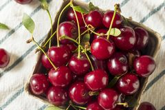 Ruwe Rode Organische Scherpe Kersen royalty-vrije stock fotografie
