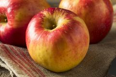 Ruwe Rode Organische Zoete Tango Gala Apples Royalty-vrije Stock Afbeeldingen
