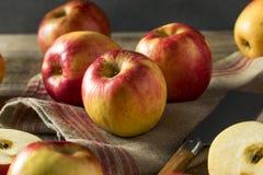 Ruwe Rode Organische Zoete Tango Gala Apples stock afbeeldingen