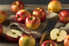 Ruwe Rode Organische Zoete Tango Gala Apples Royalty-vrije Stock Foto
