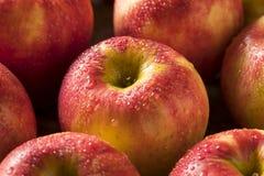 Ruwe Rode Organische Zoete Tango Gala Apples Stock Foto