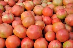 Ruwe rode tomaat Royalty-vrije Stock Afbeelding