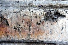 Ruwe schors en boomstam van witte berk als interessante textuur royalty-vrije stock afbeelding