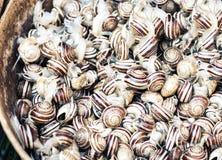 Ruwe slakken levend voor verkoop in de vissenmarkt Pescheria van Catani?, Sicili?, Itali royalty-vrije stock fotografie