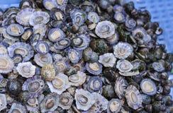 Ruwe slakken in shells levend voor verkoop in de vissenmarkt van Catanië, Sicilië, Italië stock foto