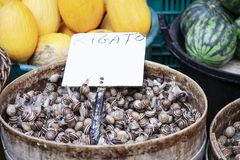 Ruwe slakken in shells levend voor verkoop in de vissenmarkt van Catanië, Sicilië, Italië royalty-vrije stock afbeelding