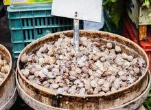 Ruwe slakken in shells levend voor verkoop in de vissenmarkt van Catanië, Sicilië, Italië stock afbeelding