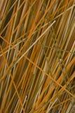 Ruwe spaghettiachtergrond Stock Afbeeldingen