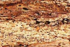 Ruwe textuur van hout die door boring insecten wordt vernietigd stock foto