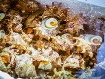 Ruwe tulbandshells treffen voor verkoop in verse zeevruchtenwinkel voorbereidingen Royalty-vrije Stock Fotografie