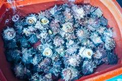 Ruwe tulbandshells treffen voor verkoop in verse zeevruchtenwinkel voorbereidingen Stock Foto's