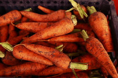 Ruwe van de wortelmarkt dichte omhooggaande foto als achtergrond royalty-vrije stock foto