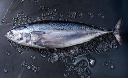 Ruwe verse tonijnvissen stock afbeelding