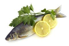 Ruwe vissen met citroen en peterselie Royalty-vrije Stock Afbeelding