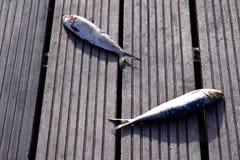 Ruwe vissen op een houten raad Stock Afbeelding
