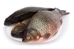 Ruwe vissen op plaat Stock Afbeelding