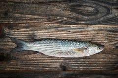 Ruwe vissen over houten achtergrond, hoogste mening royalty-vrije stock afbeelding