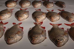 Ruwe vissen rudd Royalty-vrije Stock Afbeelding