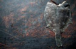 Ruwe vissenbot royalty-vrije stock foto