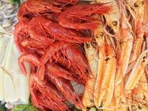 Ruwe Zeevruchten Royalty-vrije Stock Afbeelding