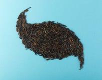 Ruwe Zwarte Wilde Rijst op Pale Blue Paper Background royalty-vrije stock foto's