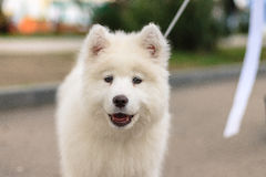 ruwharige hond †‹ royalty-vrije stock afbeeldingen