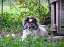 Ruwharige hond buiten zijn huis Royalty-vrije Stock Fotografie
