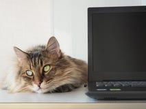 Ruwharige kat met laptop concept computeroverleg Royalty-vrije Stock Fotografie
