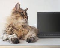 Ruwharige kat met laptop concept computeroverleg Stock Afbeeldingen
