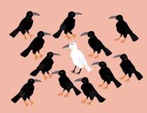 Ruwharige witte kraai onder zwarte raven Stock Fotografie