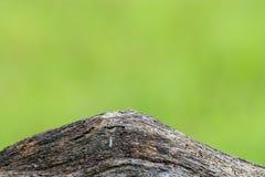 Ruwweg geweven hoop van rots Royalty-vrije Stock Afbeelding