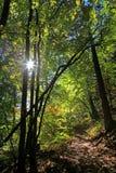 在镇Ruzomberok附近的森林 免版税库存照片