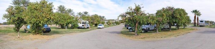 RV Camping in an Orange Grove - Panorama Stock Photo