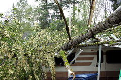 Rv damaged by falling tree Royalty Free Stock Image