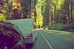 RV in Redwood Forest. RV Trip in Northern California. Travel Trailer Pulled by SUV on the Side of the Redwood Road. United States Royalty Free Stock Photo