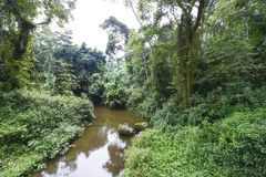 Jungle, Creek in Uganda Stock Photography