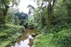 Rver och djungel i Uganda Arkivbild